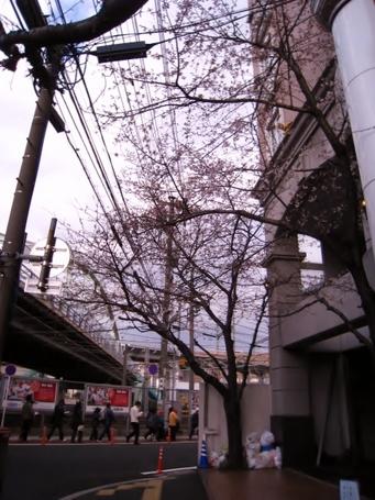桜0403.JPG