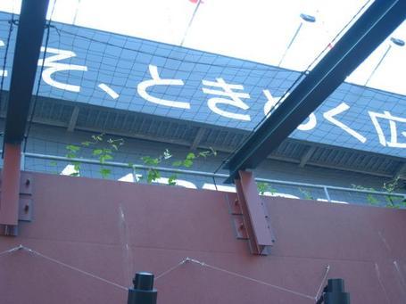 アサガオ3.JPG