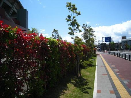 街路樹2.JPG
